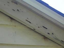 Termite Inspector Carpenter Bee Damage